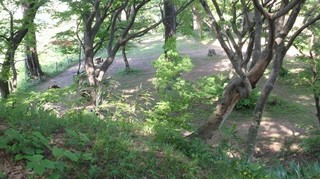 chi_park_kasuga_1505_(38).jpg